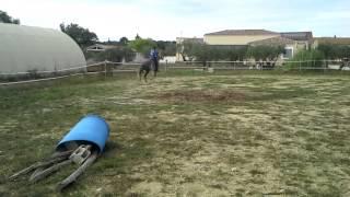 Ugo super cheval de tri de bétail !!!