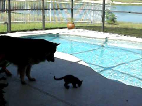 Kitten falls in the pool !