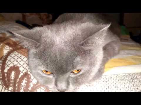 Кот ложится к животу беременной