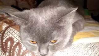 Почему кошки предпочитают спать на животе хозяина