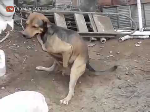 JUST A DOG MASTURBATING WITH HIS PAWS