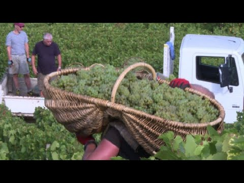 wine article France winery puts all its grapes in one basket