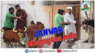 | Janwar Kha Gaya Note Prank | By Nadir Ali In | P4 Pakao | 2019