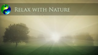 Relaxing Music: Yoga Music; New Age Music; Meditation Music for Relaxation; Spa Music  🌅 603