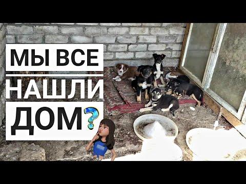 Последнее видео про 13 бездомных щенят