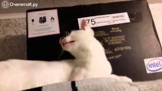 Вот какой кошачий язык