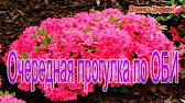 Выращивание рассады цветов ч.1 - YouTube