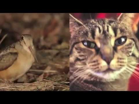 Bird and Cat sing 'Shine' by Collective Soul