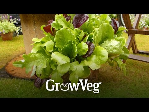 GrowVeg Organic Gardening Advice, Apps & Software