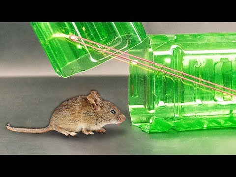 Вопрос: Почему мыши второй раз не попадаются в ту же ловушку?