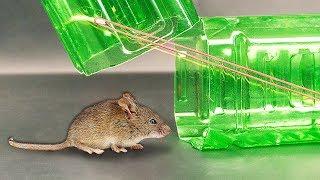 как поймать мышь бутылкой. Лайфхаки для жизни