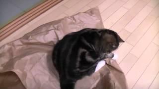 Big paper and Maru-