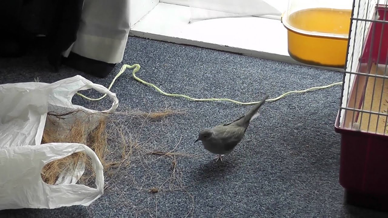 how to get rid of doves nesting