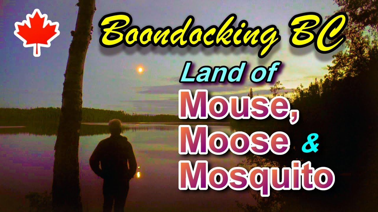 Land of Mouse, Moose and Mosquito: Boondocking BC