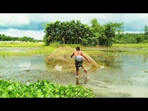 Rural Net Fishing -  He Cast The Net to Catch Fish for His Family - Cambodia Traditional Fishing