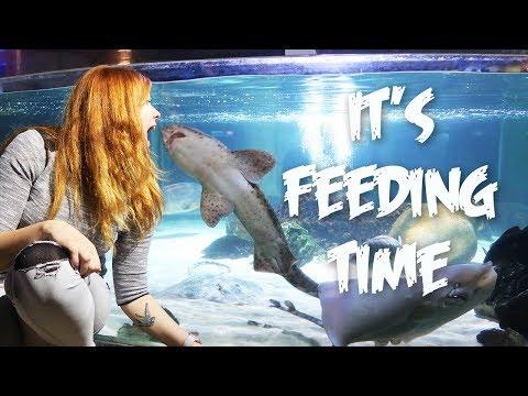 Amazing aquarium tanks, Sea Life Constance, Giant sea turtle eating, Travel vlog | Couple Vlog #74