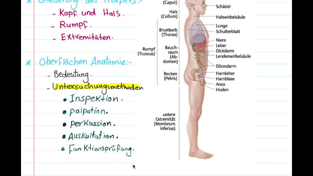 01 Einleitung Anatomie Deutsch - YouTube