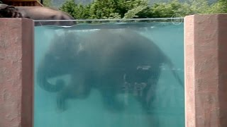 В Японии можно посмотреть на плавающих слонов (новости)(http://ntdtv.ru/ В Японии можно посмотреть на плавающих слонов. Невиданное и захватывающее зрелище ждёт с понедель..., 2015-07-13T13:31:54.000Z)