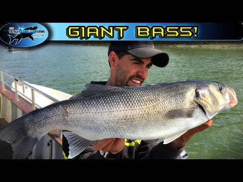 Giant Bass Fishing from Moored boats | TAFishing