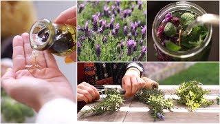 My Garden Diary: Herbal Infusions & Tea