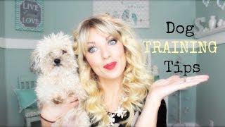 ❤ Dog TRAINING Tips ❤ Thumbnail