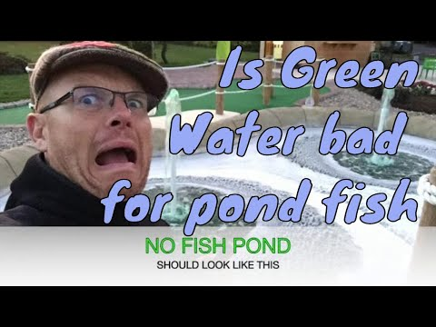 Is Green Pond Water Bad For Pond Fish - UK