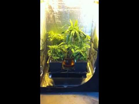& Hydro grow tent set up at hg hydroponics - YouTube