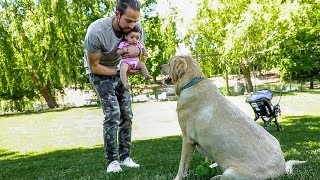 Surprising My Wife and Baby WITH A DOG...kinda