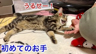 「お手」の声にブチギレながらもしっかりと反応してくる猫w
