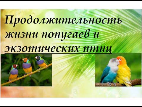 Продолжительность жизни попугаев и экзотических птиц