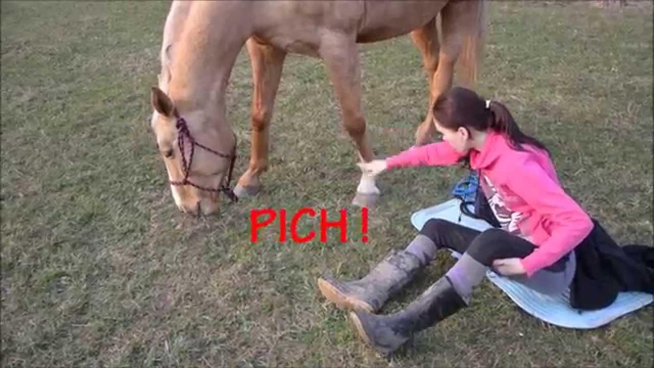 funny horse fails - 1280×720