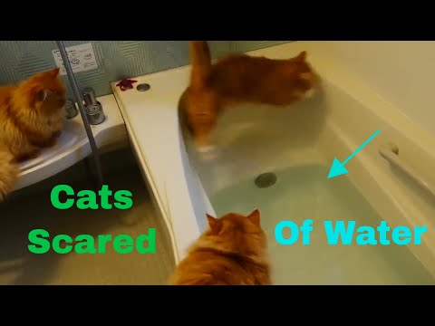 Cats Scared of Water Compilation