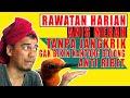 Rawatan Anis Merah Harian Gak Perlu Ribet Menstabilkan Gacornya Pastinya  Mp3 - Mp4 Download