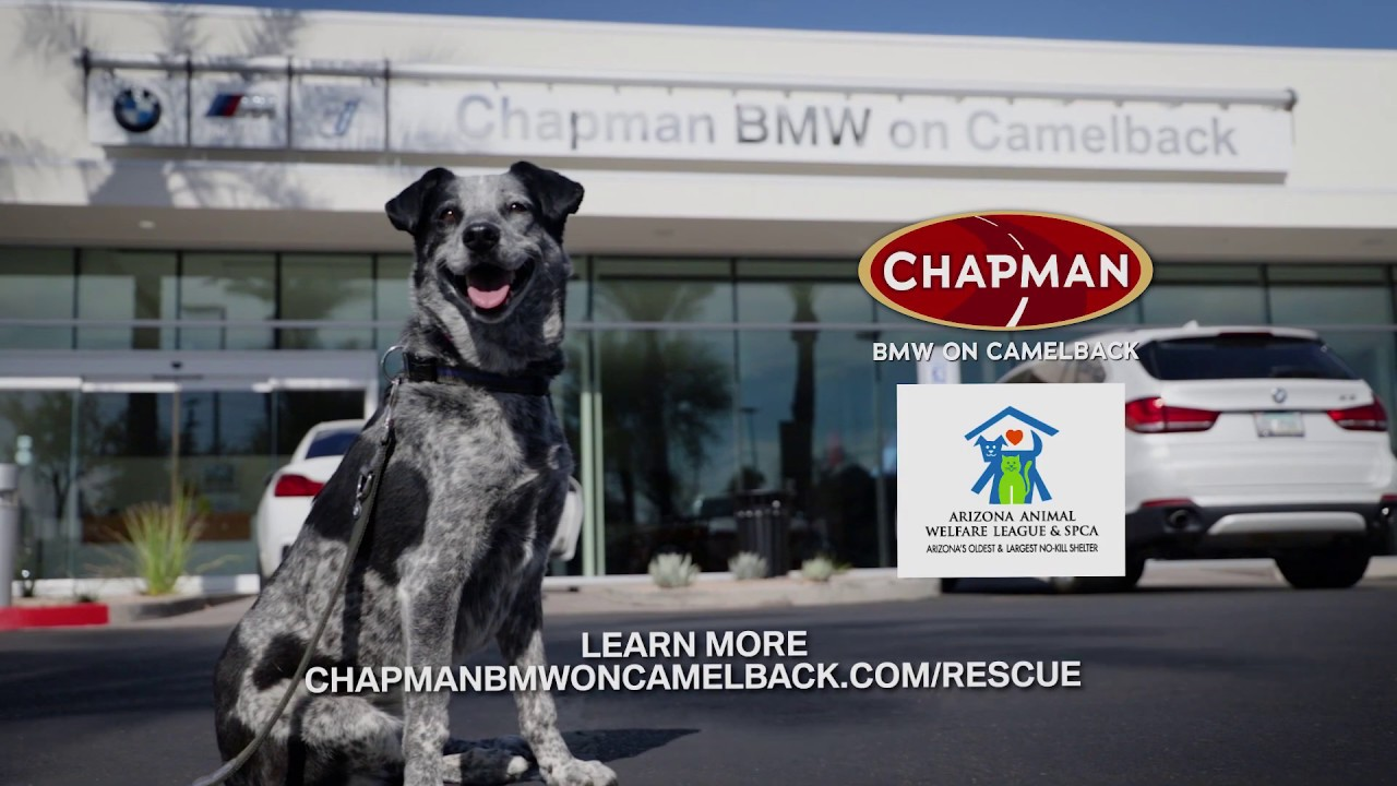 Chapman Bmw On Camelback >> Chapman Bmw On Camelback Help Support The Arizona Animal Welfare League
