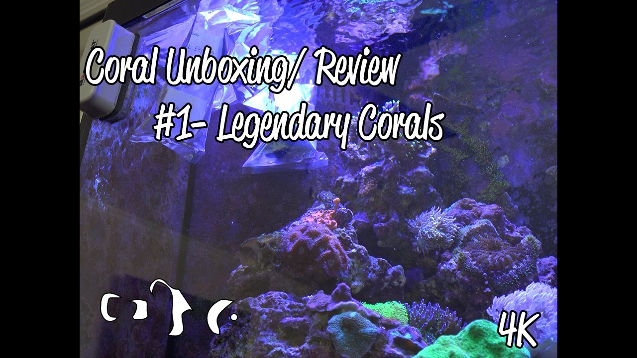 4k Coral Unboxing and Review #1 Legendary Corals