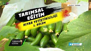 @Bereket TV  Tarımsal Eğitim - Hıyar Yetiştiriciliği / 1. Bölüm