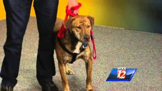 Noon Pet Of The Week:  Sonny