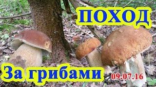 Поход за грибами в новое место 09.07.16