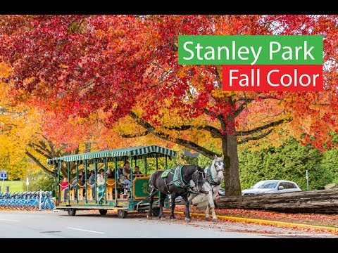 Stanley Park  Falls Foliage Autumn Colors | Vancouver Canada  4K
