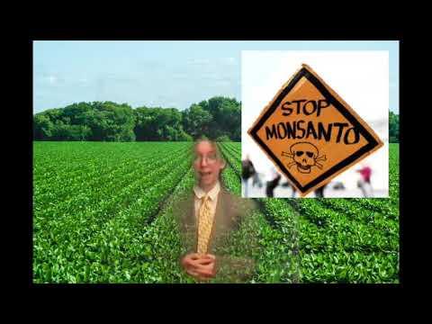 GMO soybeans, glyphosate, and monsanto