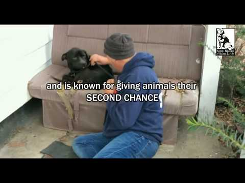 The man who gives animals a second chance, gets his! - Stray Rescue of St.Louis