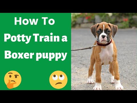 How To Easily Potty Train A Boxer Puppy? This Is The Easiest Technique Possible..