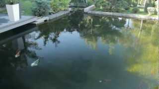 видео Как мы строили пруд на даче своими руками, история первая