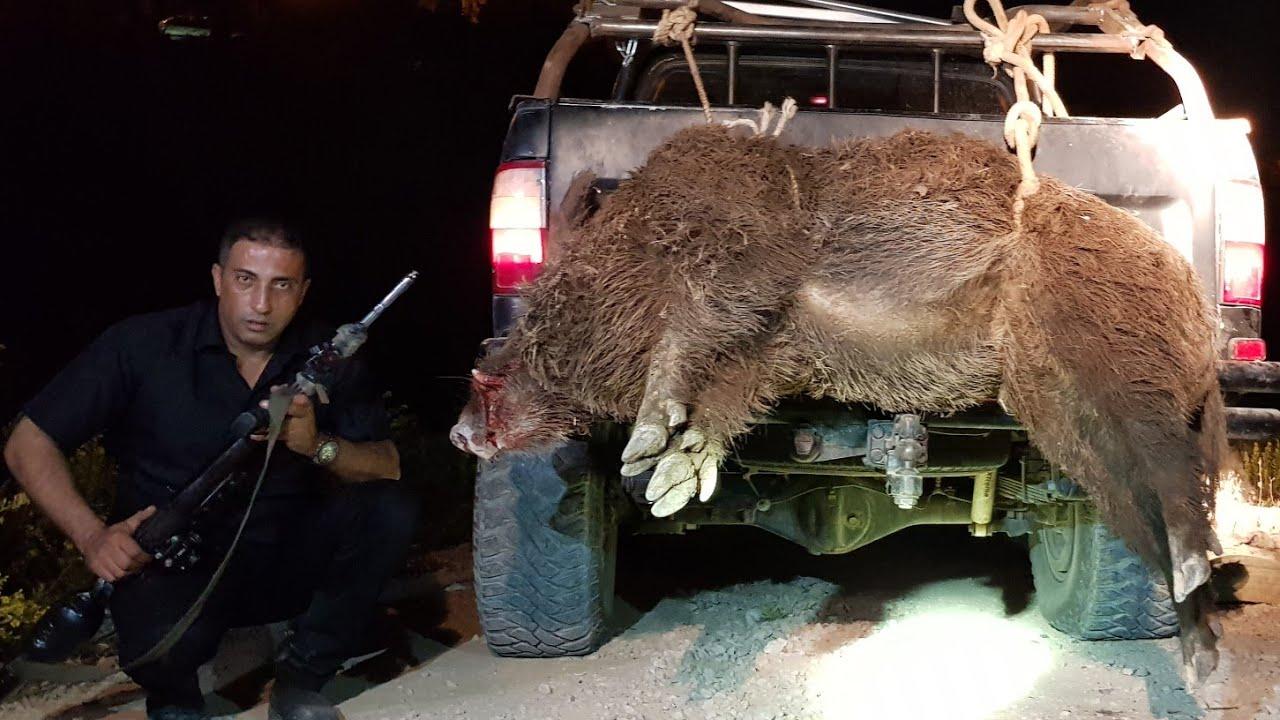 صيد خنزير عملاق بوزن 155كغم مع جمال العمواسي