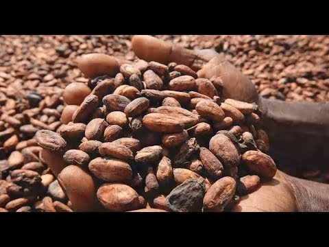 Why sustainability in cocoa and chocolate matters