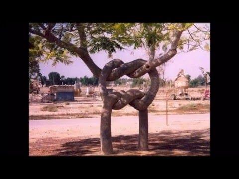 удивительно красивые и необычные деревья