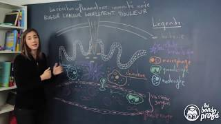 Réaction inflammatoire : l'immunité innée - SVT Terminale - Les Bons Profs