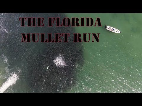 Mullet run drone video I got in Stuart Florida