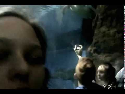 Oceanarium Wroc?aw