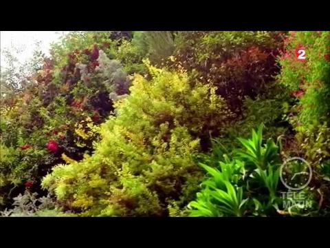 Jardin - Le jardin de Patrick Blanc - YouTube